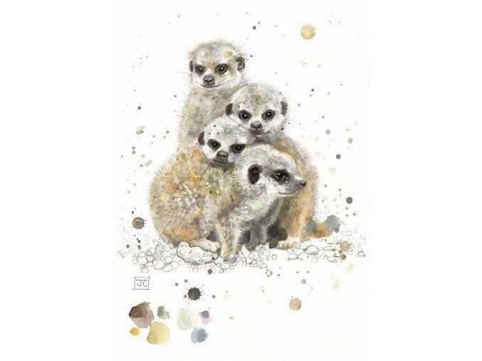 F012 Baby Meerkats2