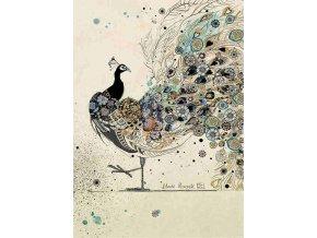 H018 Black Peacock