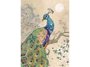 D191 Peacock