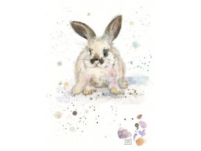 F009 Baby White Rabbit2