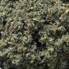 Bylinný čaj: Malina list 65g BLNC154 BYLINCA