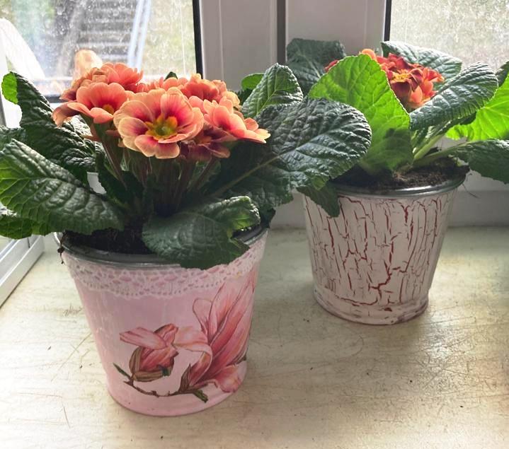 Jak si s pomocí techniky decoupage vytvořit krásné květináče