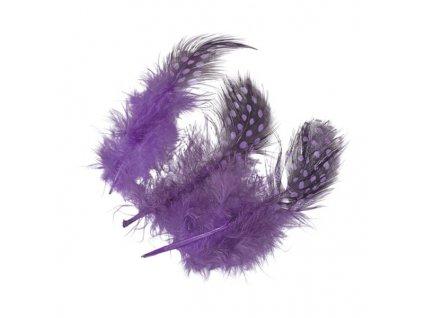 Peříčka kropenatá fialová