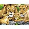 PJL4 malování podle čísel lví rodina