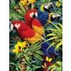 PJS83 malování podle čísel papoušci