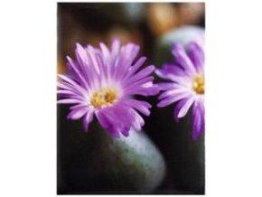 Fotoalbum 10x15/100foto MM-46100(PL) One color Fialový - 2 POSLEDNÍ KUSY -
