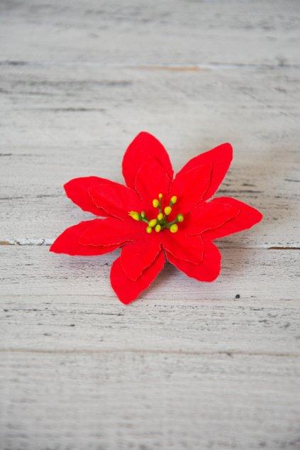 Sametový květ vánoční hvězdy.  Průměr květu 9 cm.