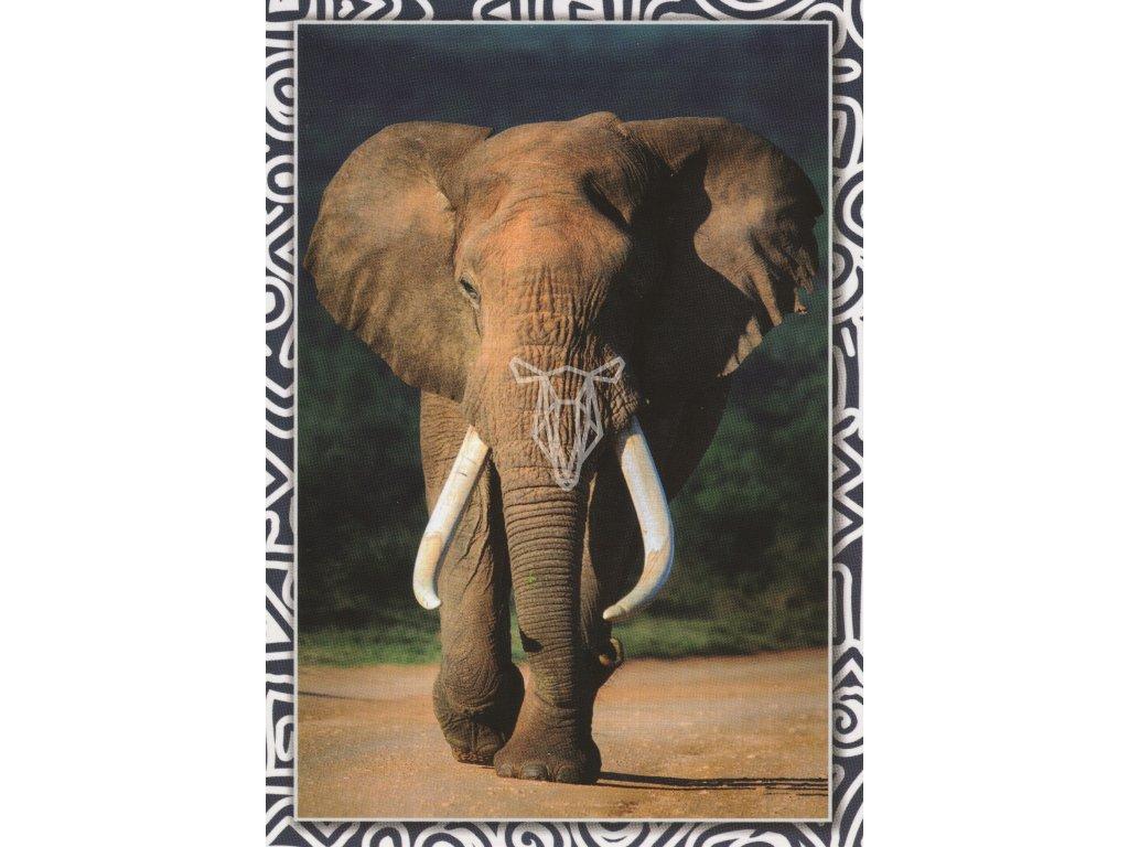 Pohlednice Slon před bouří