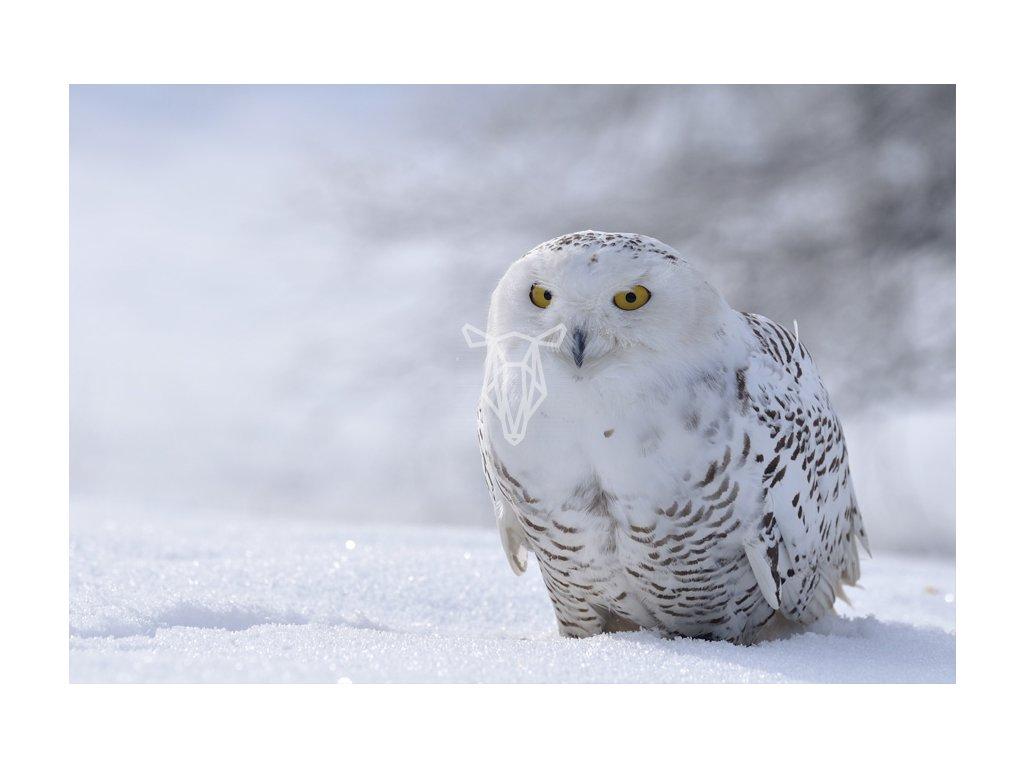 Sowa na sniegu pocztowka przyrodnicza