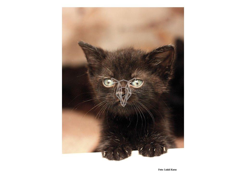 13682 3 pohlednice cerne kote