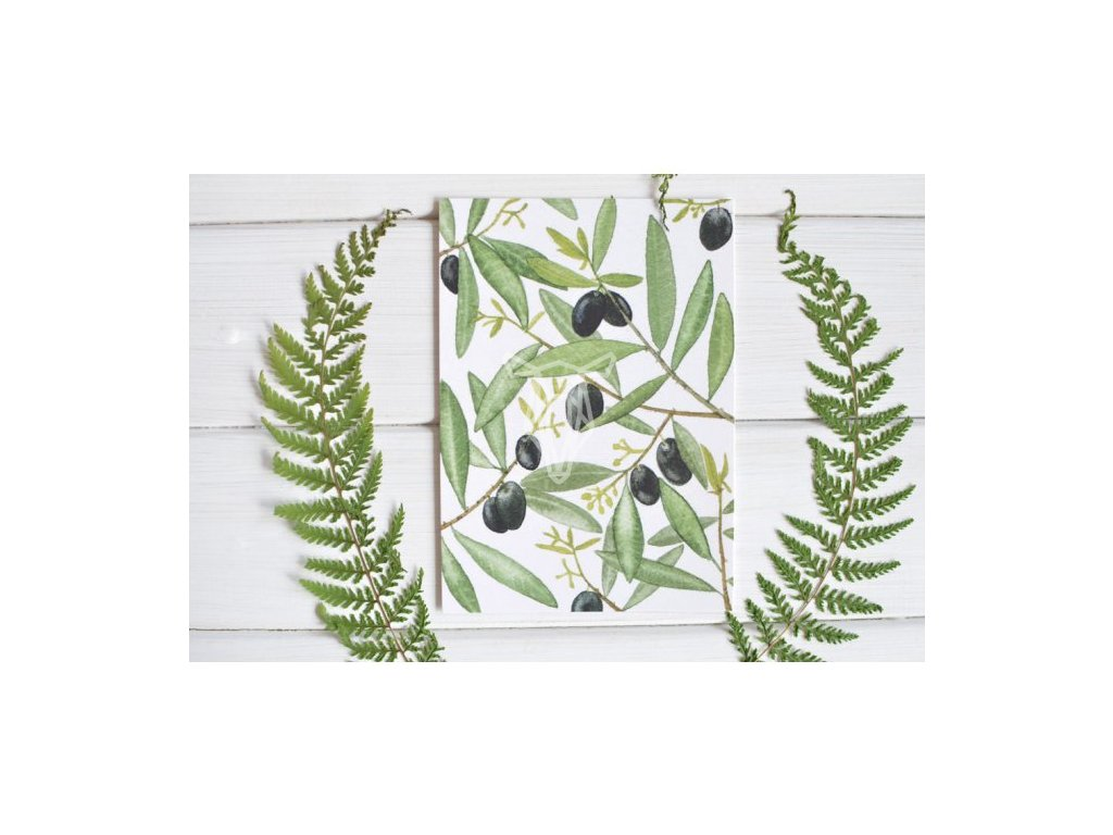 12860 3 pohlednice cerne olivy