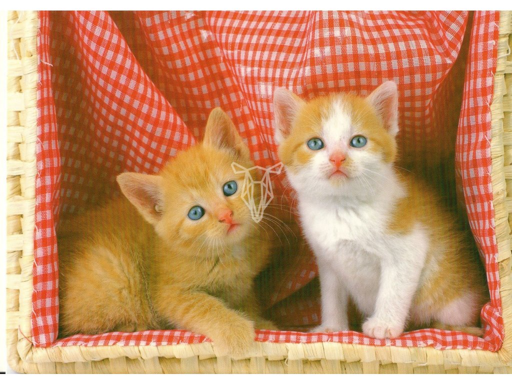 6833 1 pohlednice dve kotata v proutenem kosiku