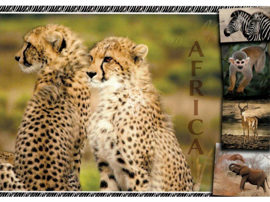 12113 2 pohlednice gepard