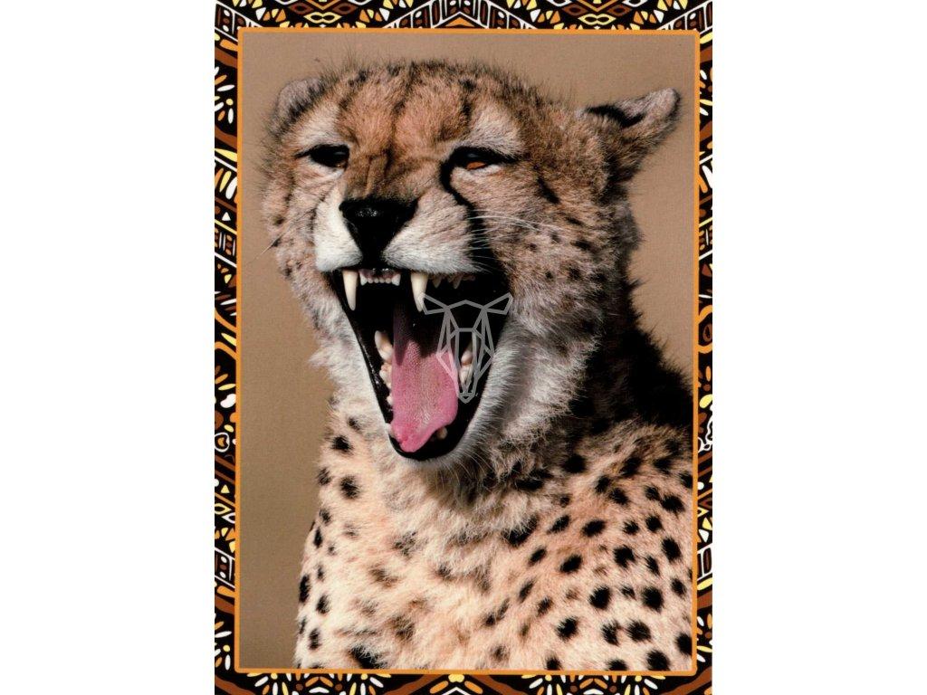12185 1 pohlednice gepard