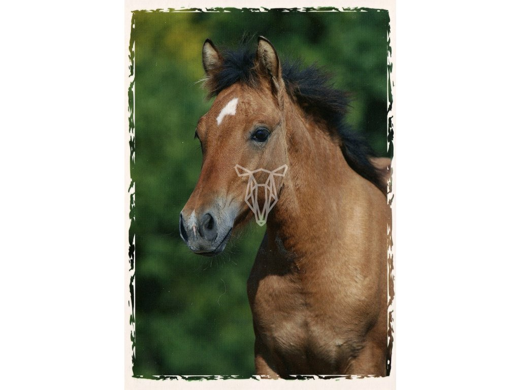5060 2 pohlednice hribe welsh part bred