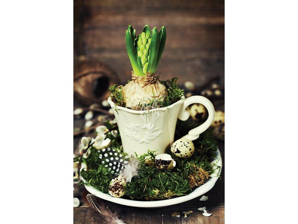 9446 2 pohlednice hyacint