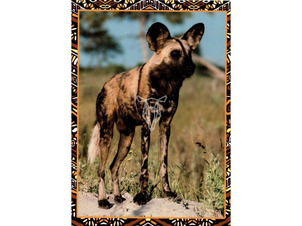 12191 2 pohlednice hyena