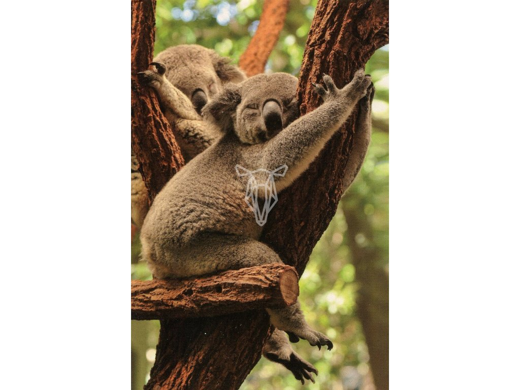 8792 2 pohlednice koala