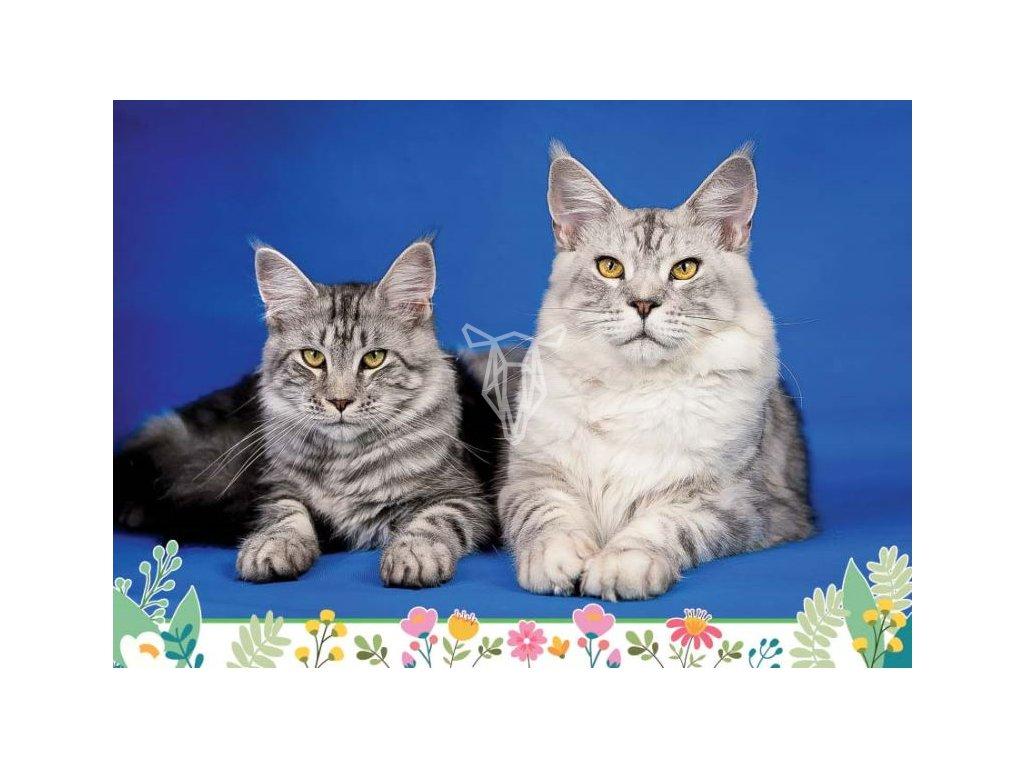 16874 pohlednice kocici par