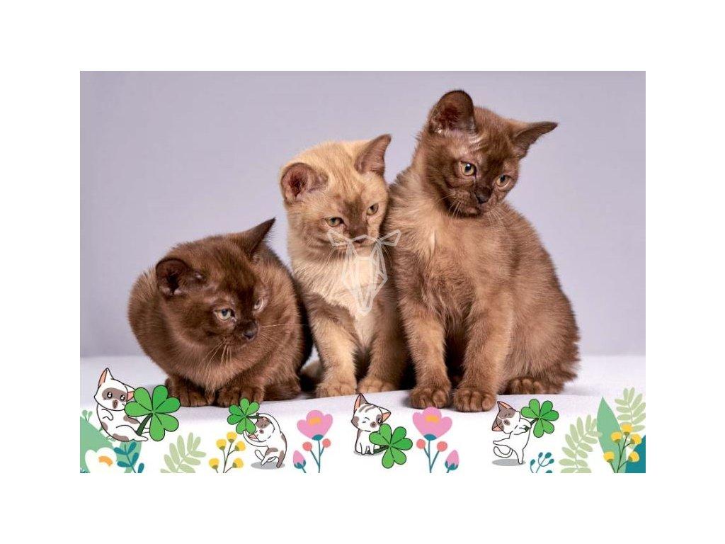 16856 pohlednice kocici snem