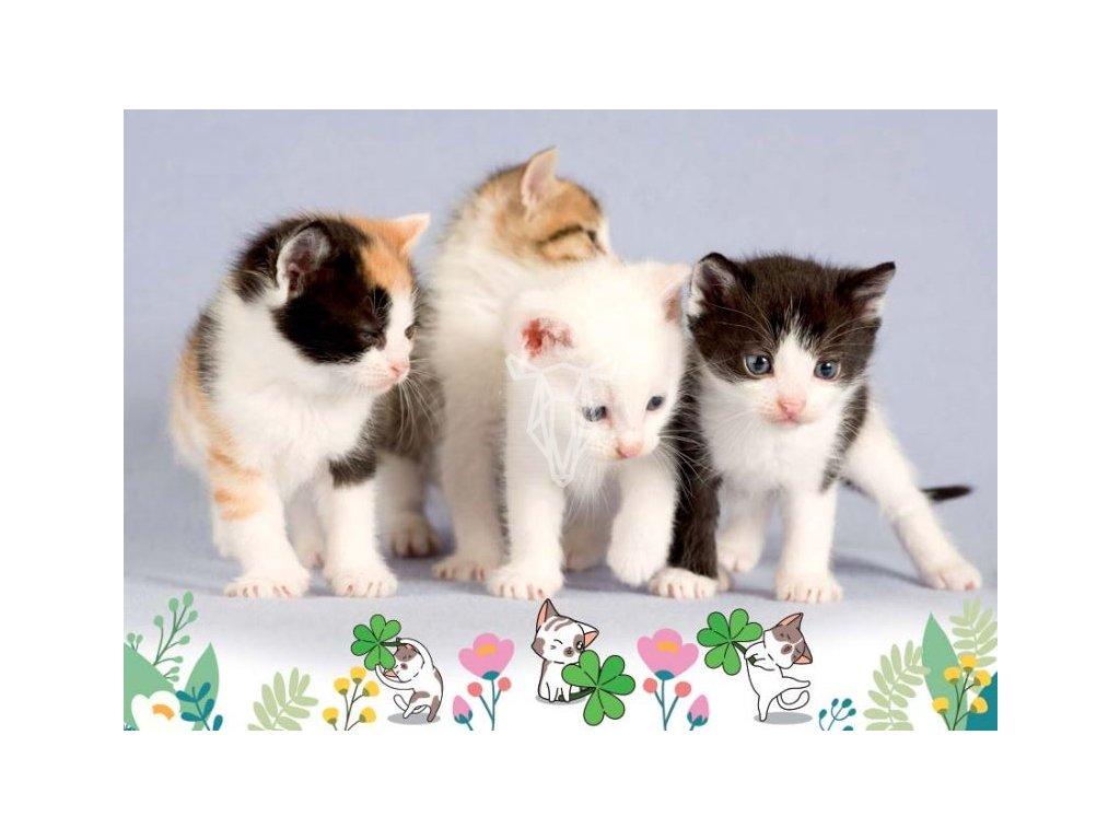 16859 pohlednice kotata