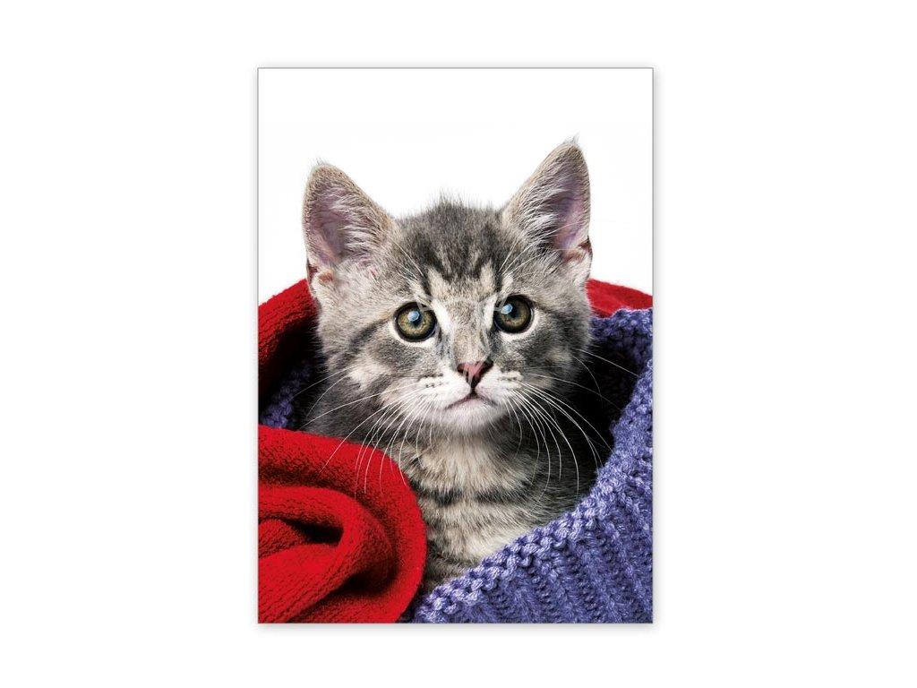 15530 2 pohlednice kote mezi svetry