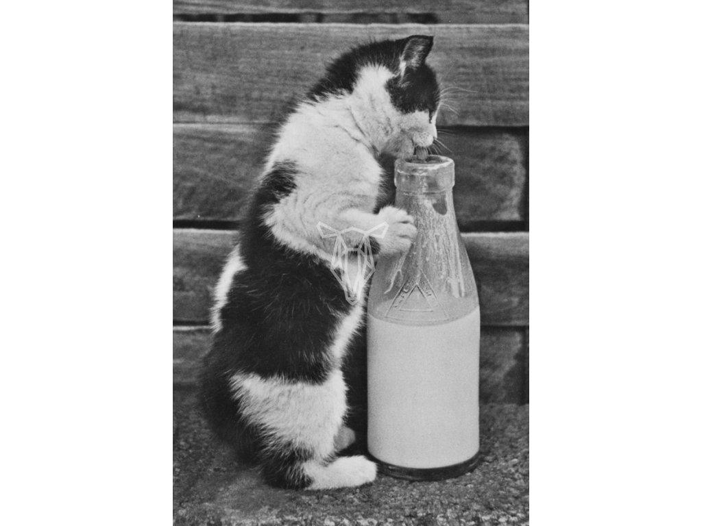 Kotek z butelka mleka
