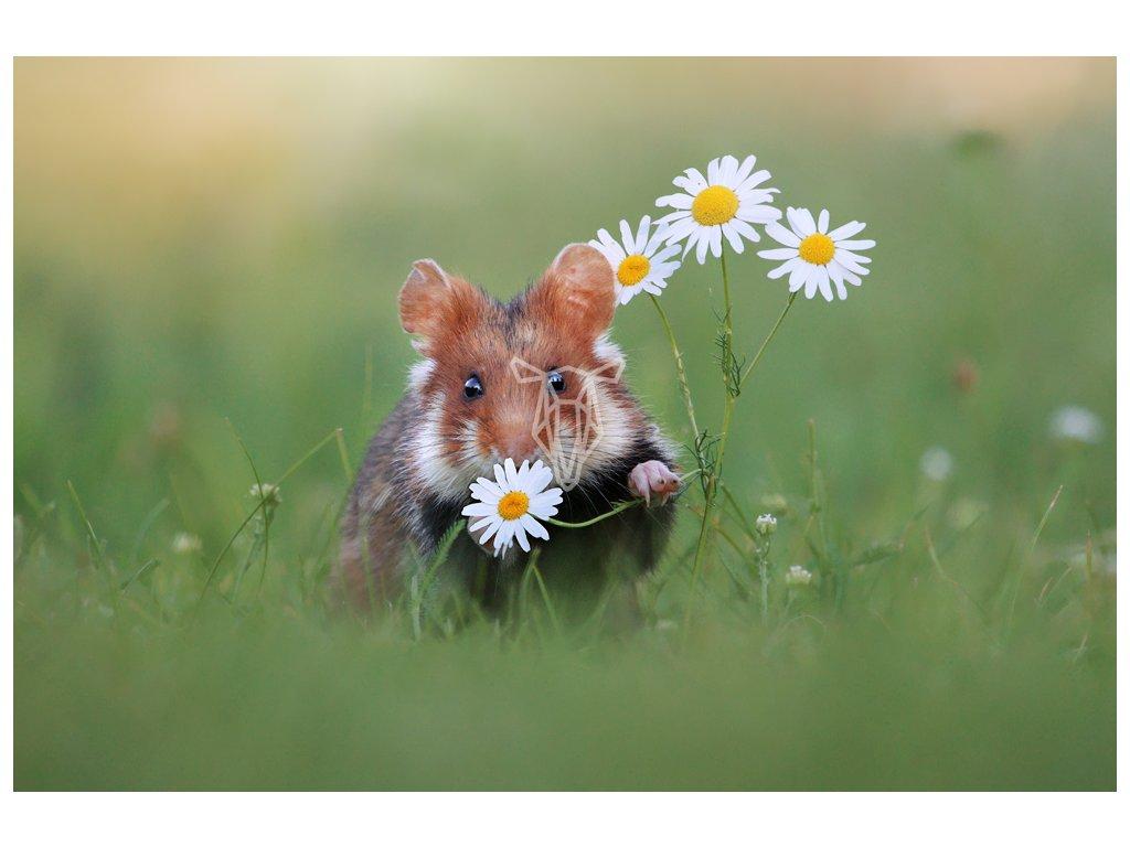 Hamster 89