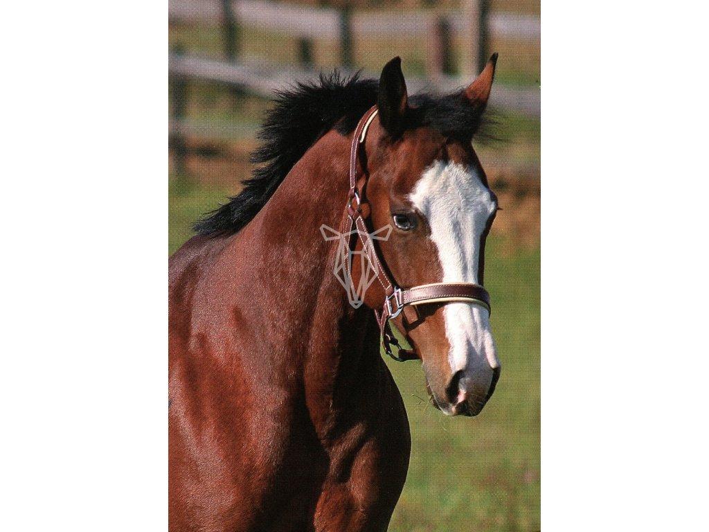1730 2 pohlednice kun modrooky quarter horse