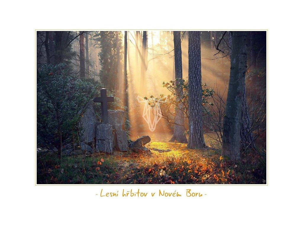 5144 2 pohlednice lesni hrbitov v novem boru 17 x 12 5 cm