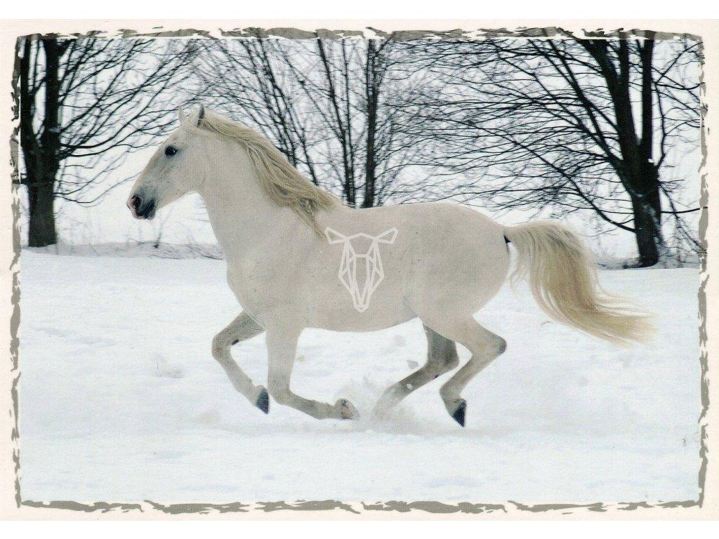 5069 2 pohlednice lipicky kun ve snehu