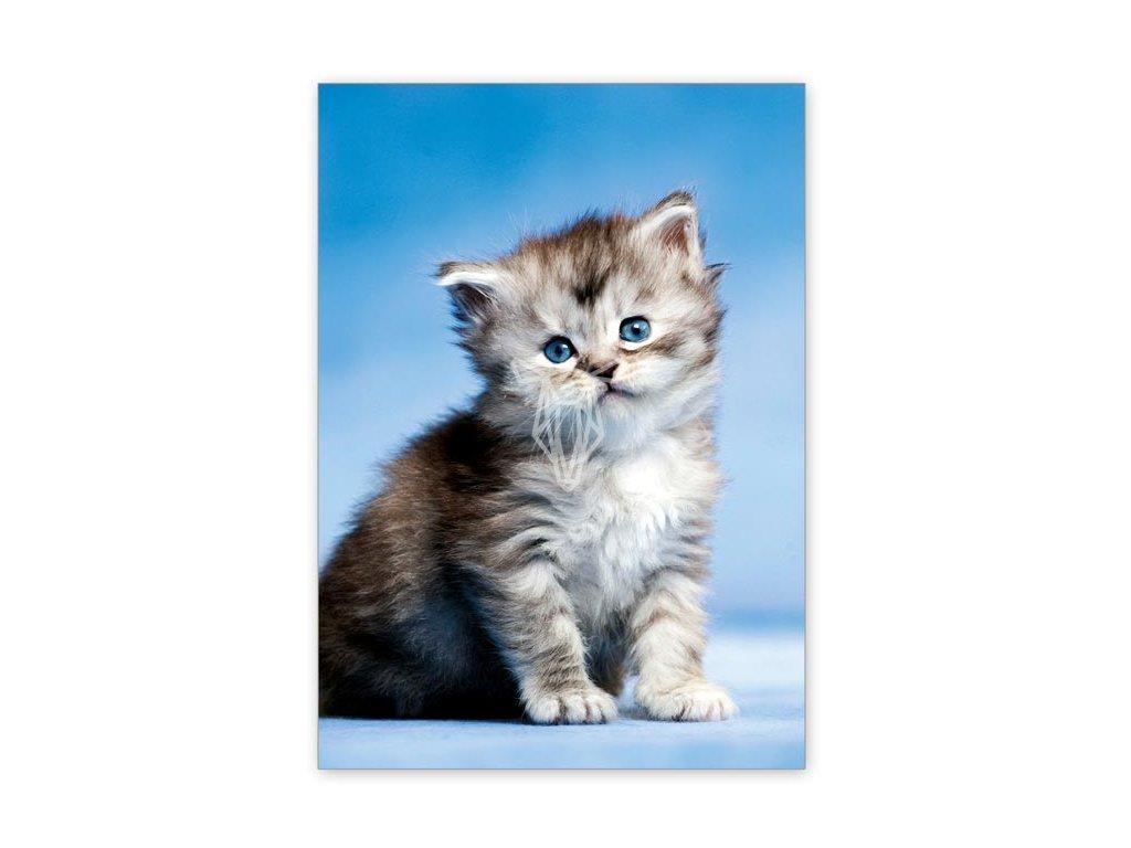 15524 2 pohlednice modrooke kote