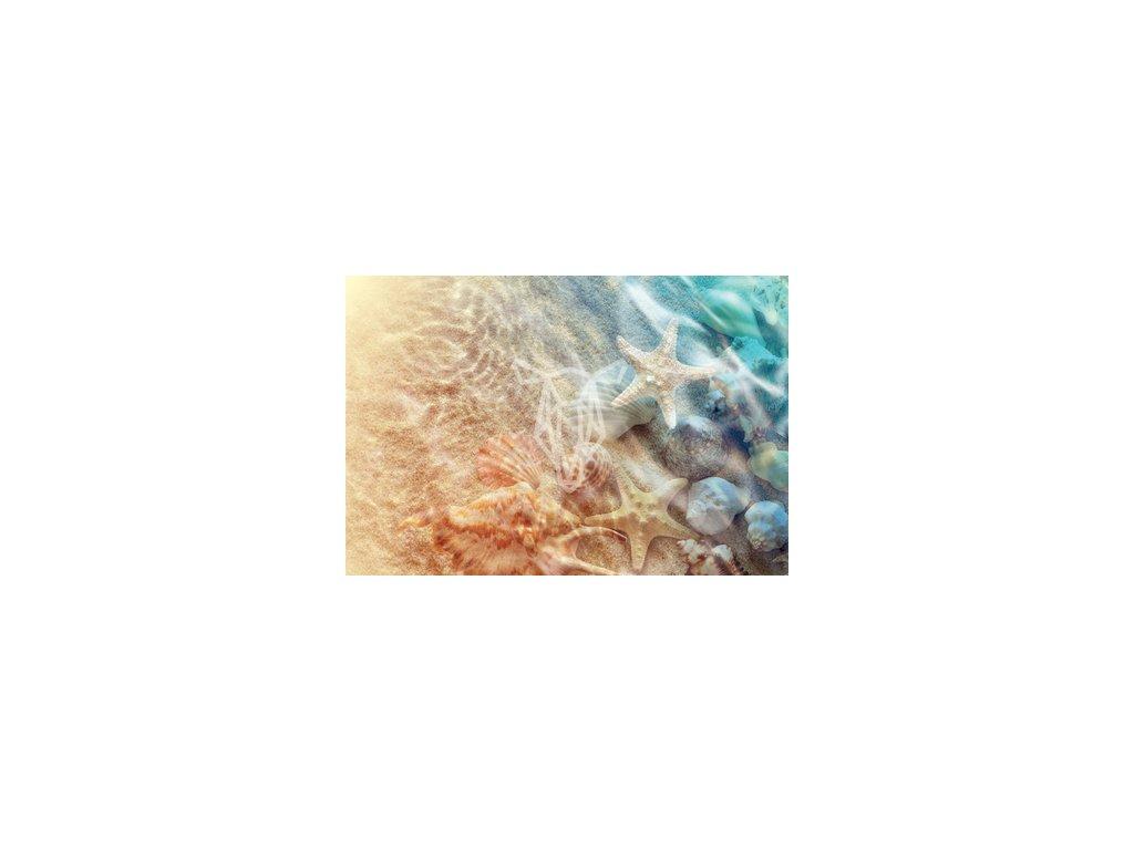 Starfish and seashell width400 3