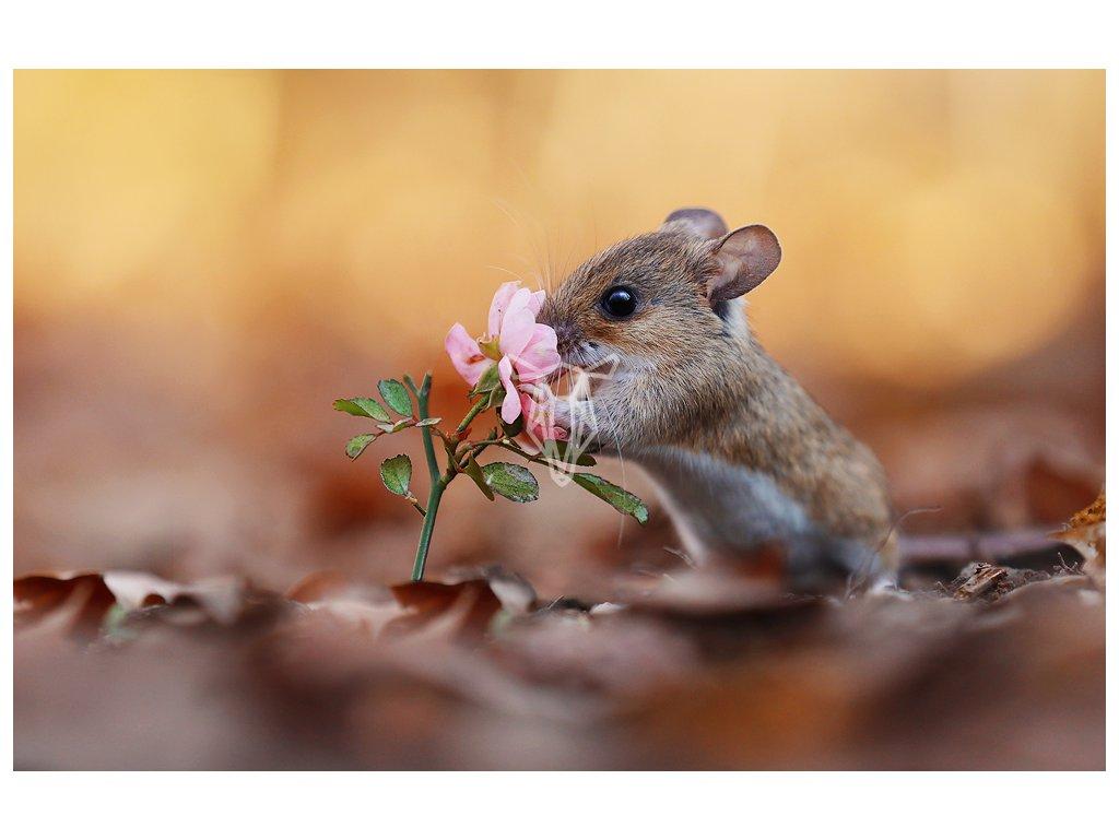 15431 3 pohlednice mysice s kvetinou