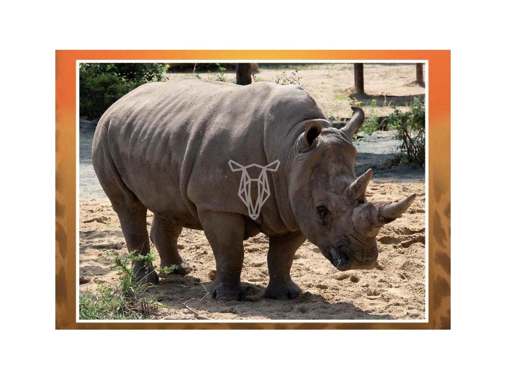 3146 3 pohlednice nosorozec