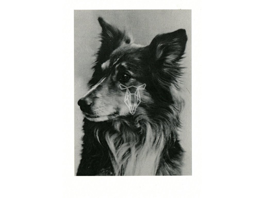 4865 2 pohlednice pes