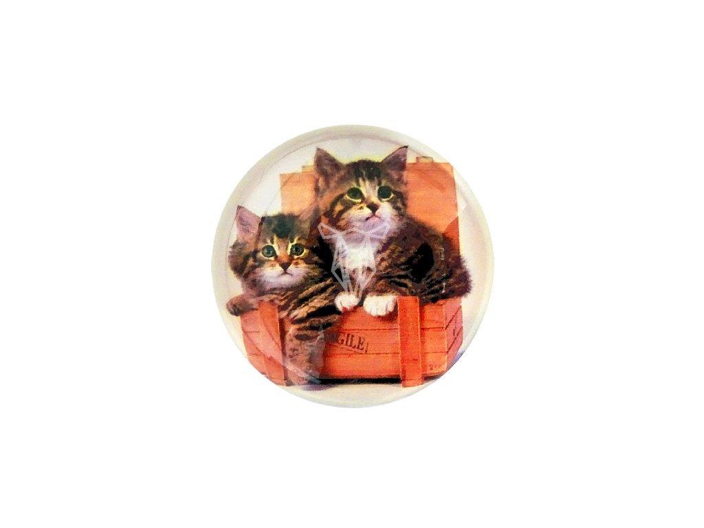 magnetka kotatka2