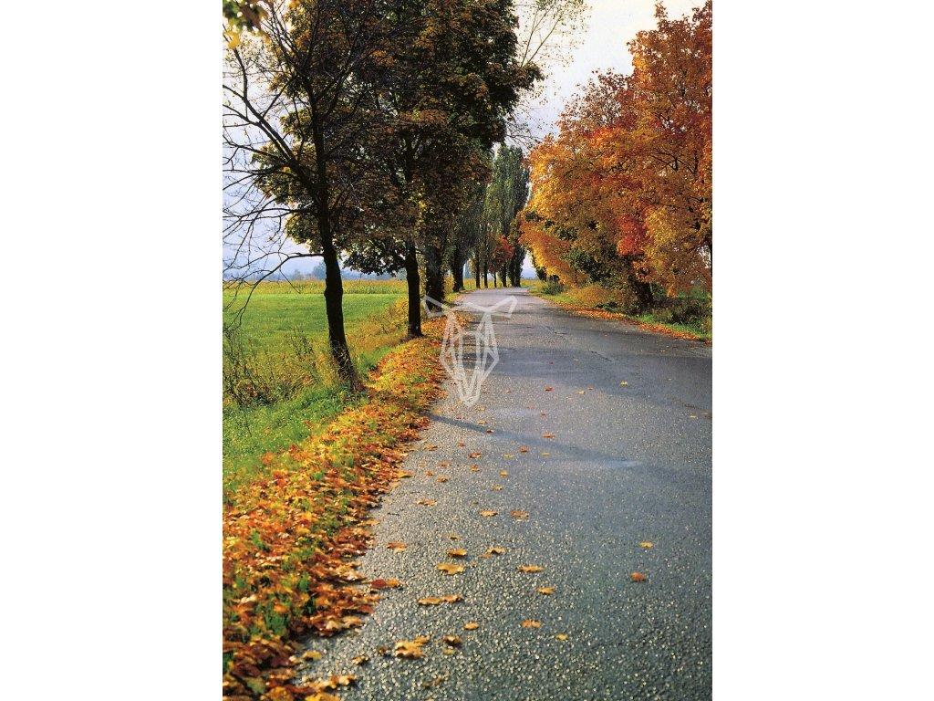 4871 2 pohlednice podzimni silnice