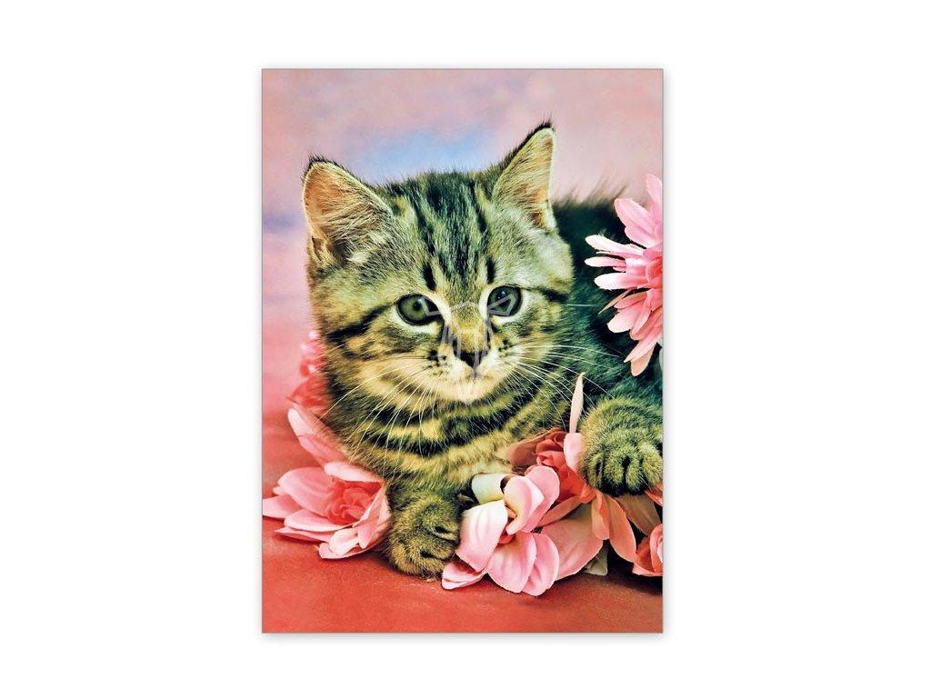 15539 2 pohlednice poeticke kote