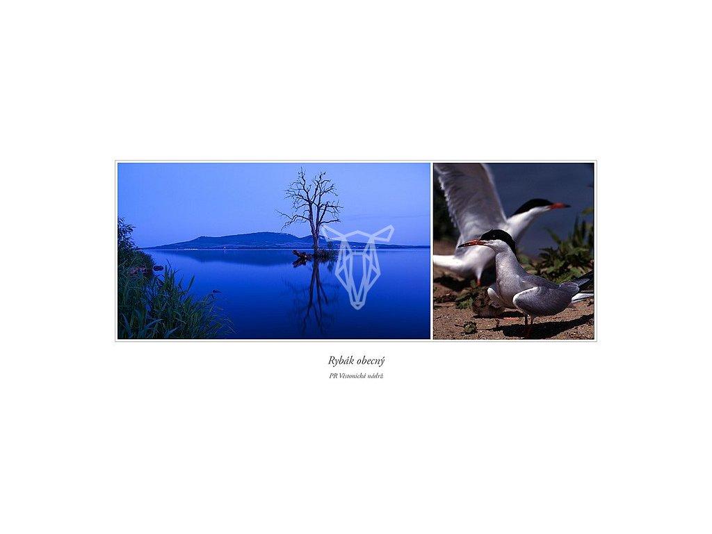 377 pohlednice pr vestonicka nadrz rybak obecny siroka