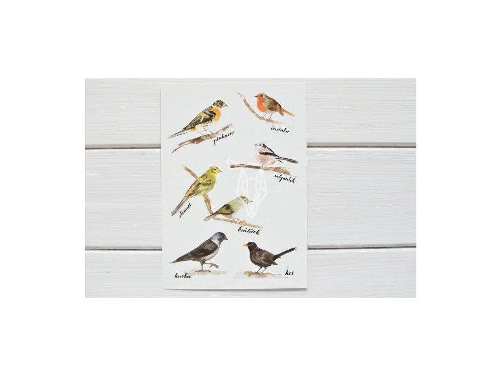12884 3 pohlednice ptaci