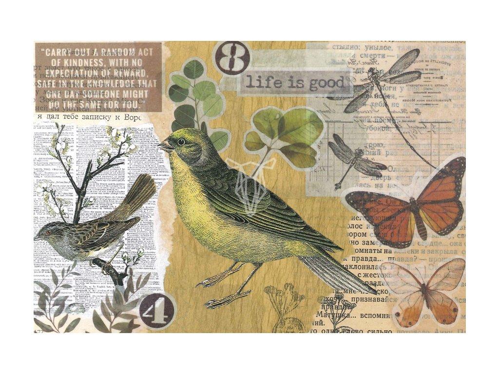 Marika Wieczorek Bunting bird