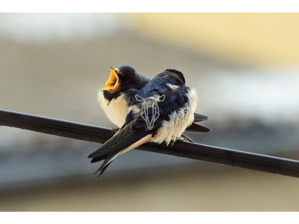ptacata 1