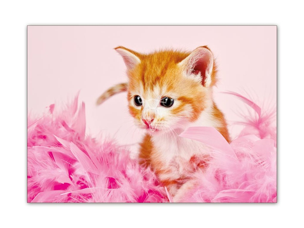 15542 2 pohlednice rozverne kote