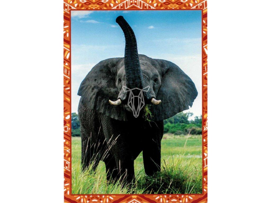 12200 2 pohlednice slon