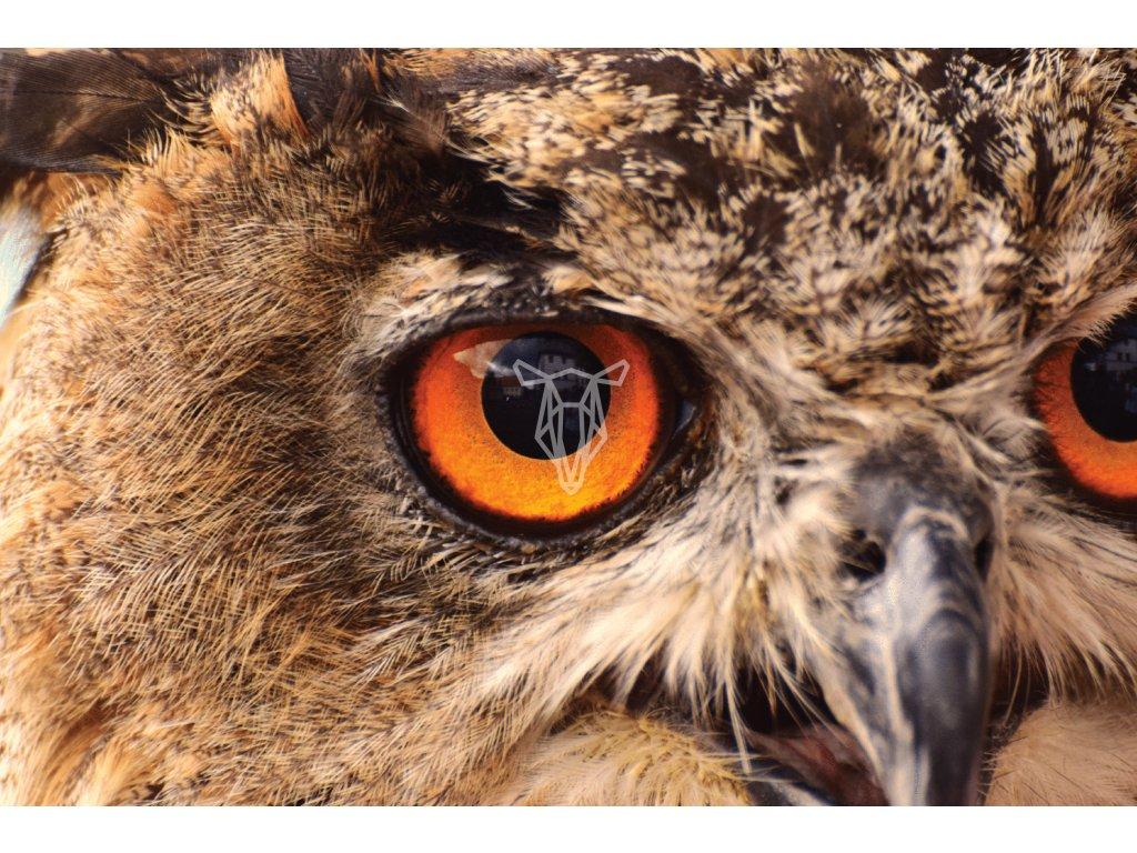 sovi oko nej 1