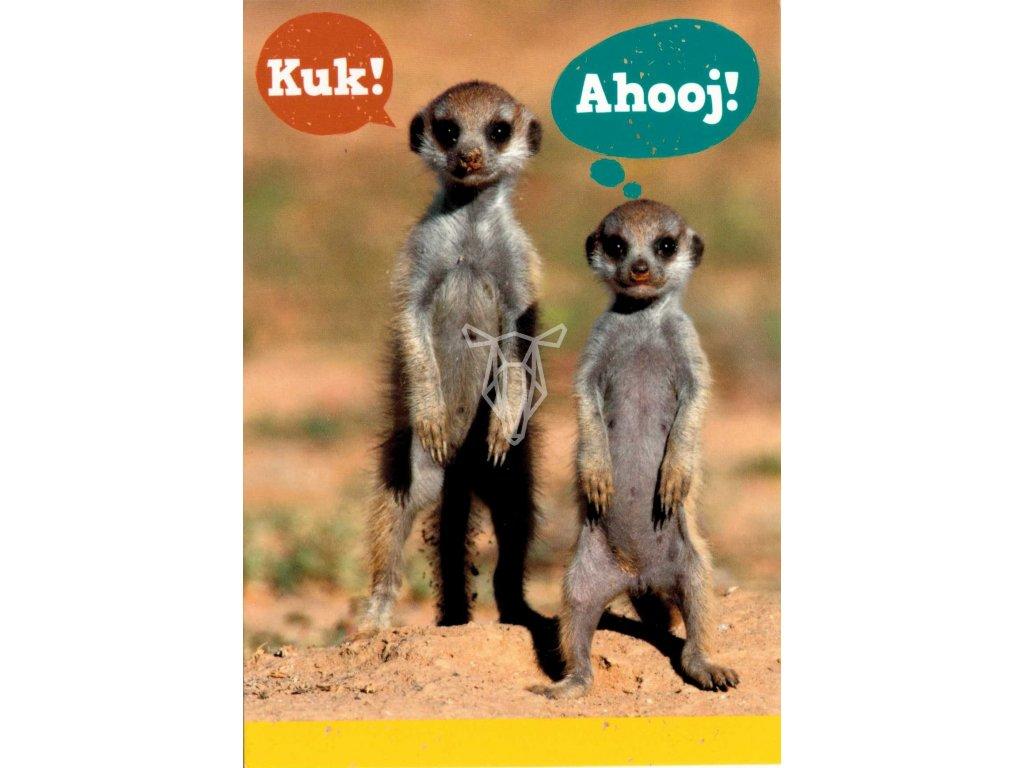 11660 1 pohlednice stojici mala surikata
