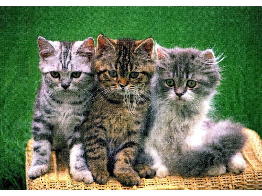 1748 2 pohlednice tri kotata na proutenem kosi