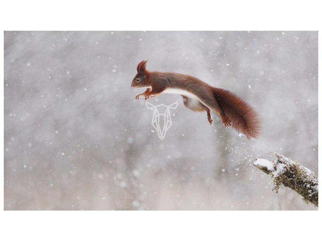 15425 3 pohlednice veverka skokanka na lyzich 2