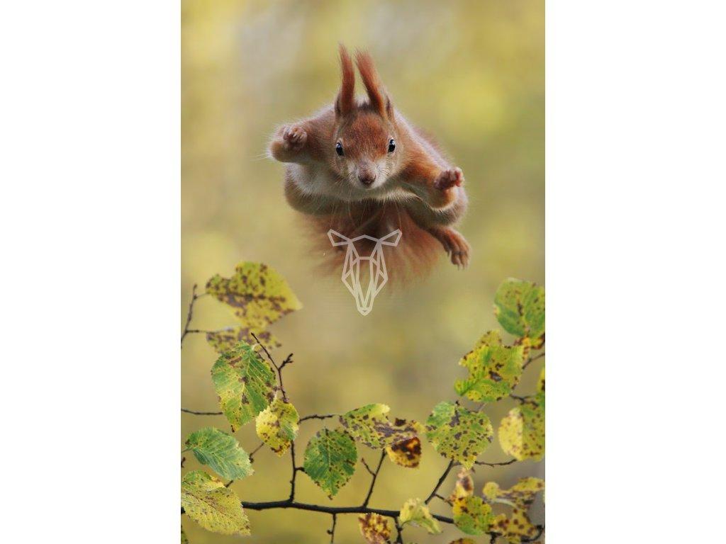 16667 pohlednice veverka ve skoku